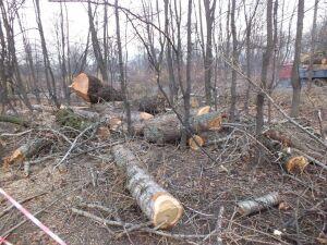 Chcą kontroli NIK w sprawie wycinki w Ogrodzie Krasińskich