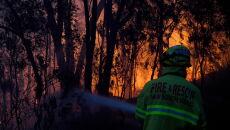 Pożary w Australii (PAP/EPA/DAN HIMBRECHTS)