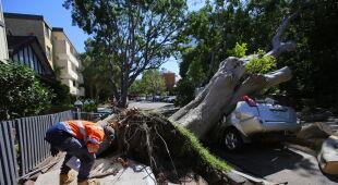 Skutki burzy w Sydney (STEVEN SAPHORE/PAP/EPA)