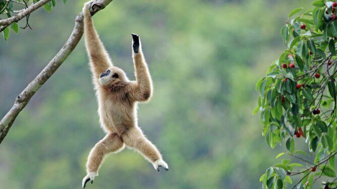 """""""Do końca stulecia może wyginąć co najmniej 550 gatunków zwierząt"""""""